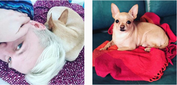 Rehabilitering – dag 25 (sjuk hund)